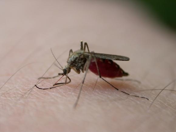 Заболевание вирусом Зика вУкраинском государстве исключено— СЭС