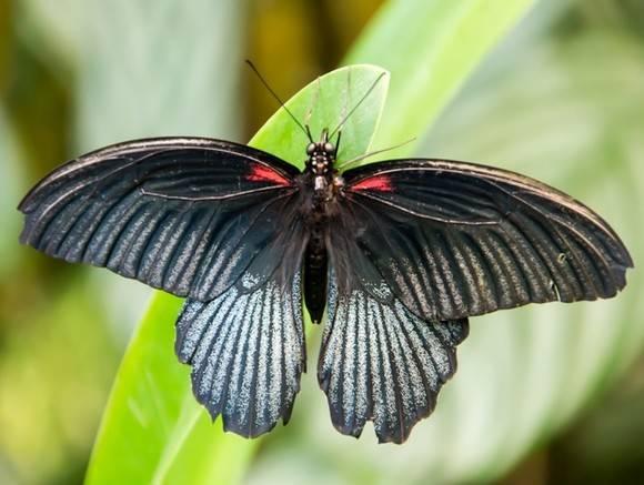 Учёные обнаружили бабочек, самки исамцы которых видят цвета по-разному