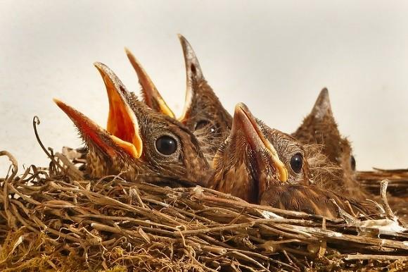 ВПетербурге перелетные птицы пострадали отзимы ксередине весны