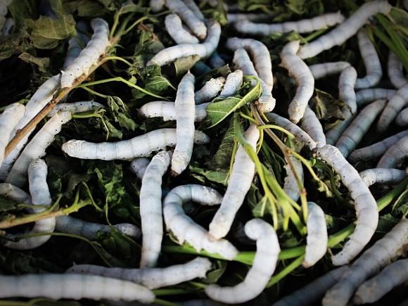 Воспитанников детского сада вЧелябинске накормили супом счервями