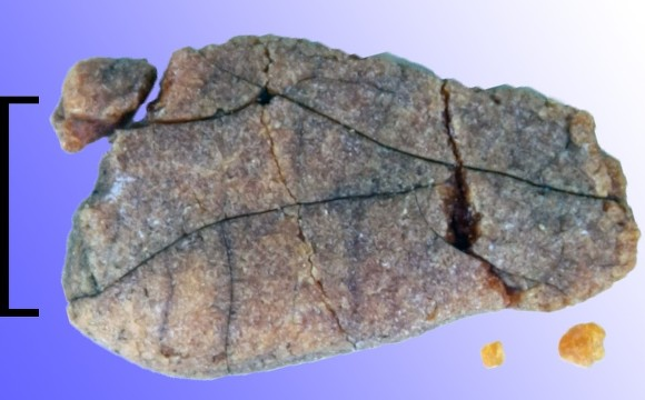 Наберегу Мурмана отыскали янтарные украшения