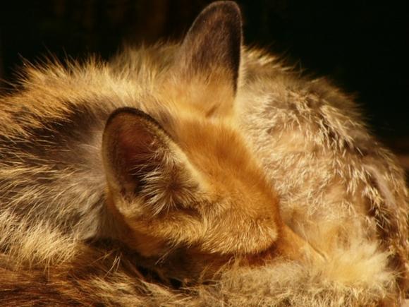 Работников зоопарка Пятигорска обвинили в варварском обращении сживотными