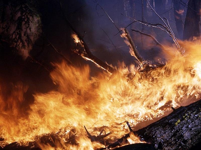 Путину рассказали о миллиардном ущербе от пожаров в Забайкалье