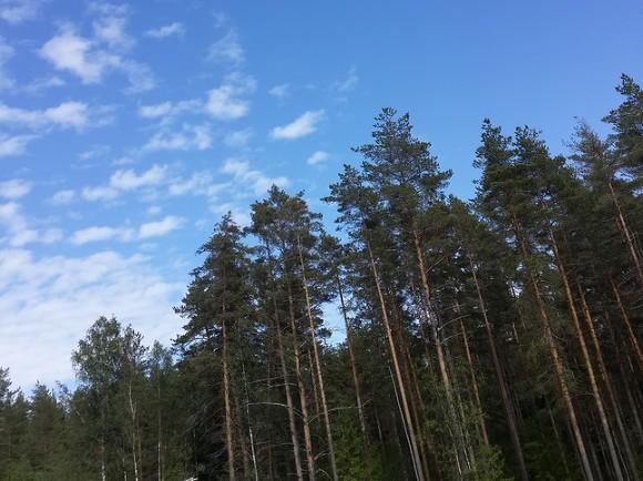 ВЧелябинской области влесу потерялась 3-х летняя девочка