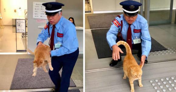Охранники уже два года непускают 2-х котов вмузей
