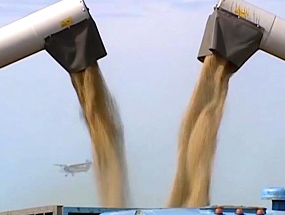 Запасы зерна кзиме увеличились на11,1%