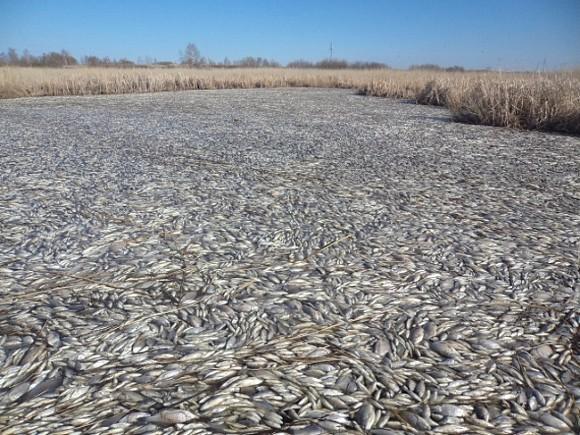 В Томске возбудили уголовное дело из-за гибели рыбы в озере