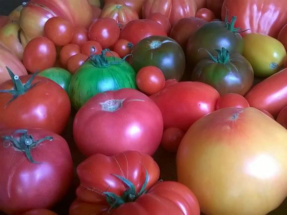Практически 10 тонн овощей изТурции уничтожили наполигоне вРостовской области