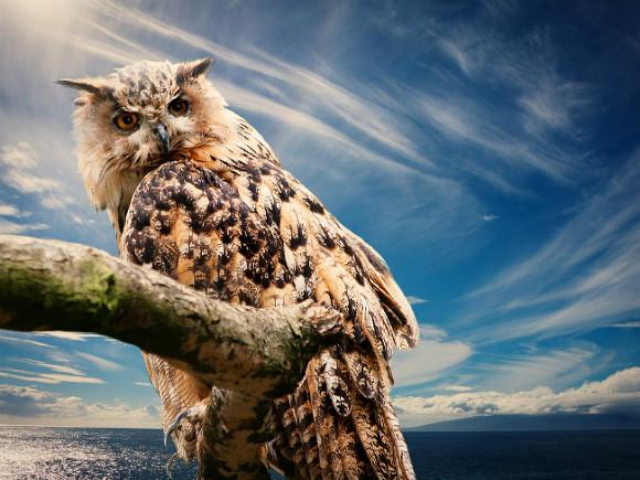 ВСызрани дикая сова напала на6-летнего ребенка