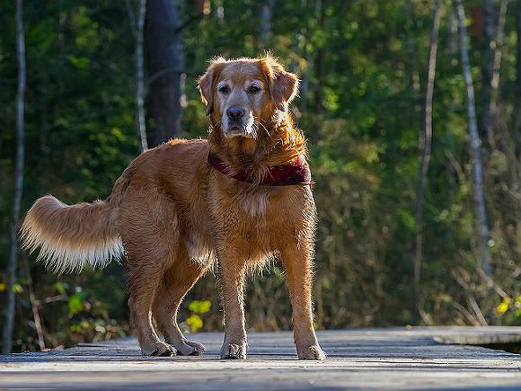 Собака-обнимака изНью-Йорка покорила сеть собственной нежностью