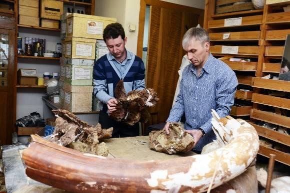 Российские палеонтологи описали новый вид динозавров из Сибири