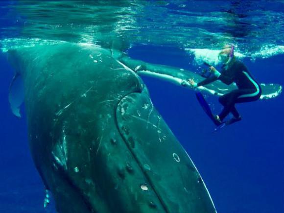 Кит защитил ныряльщицу оттигровой акулы