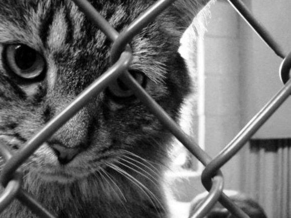 ВРязани задержали живодеров, взорвавших кота петардой