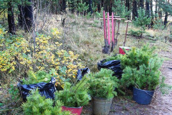 Москвичи выбрали деревья для озеленения столичных дворов
