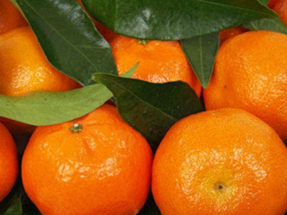 Восемнадцать тонн мандаринов украли вПетербурге