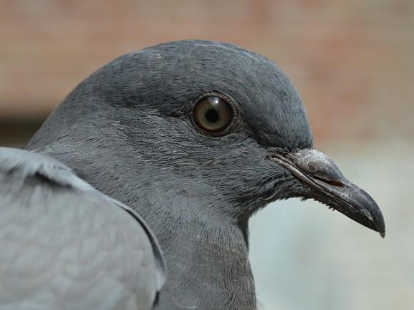 Вцентре Сочи мертвые голуби падали наголовы городских жителей
