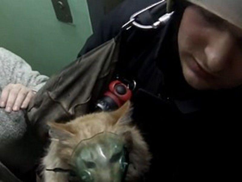 на ютубе видео как мчс кислородную маску кошке