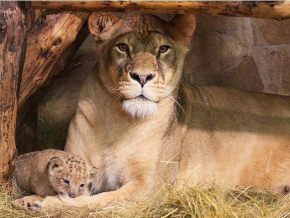 Фото пресс-службы Ленинградского зоопарка
