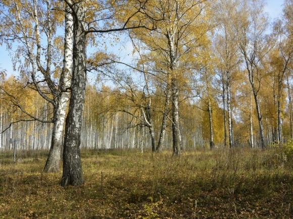 Начало недели вУкраине будет теплым, местами дожди