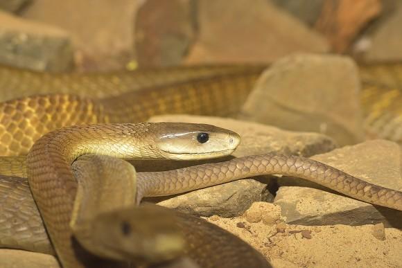 Около 300 змей находятся вдоме умершего блогера под Питером
