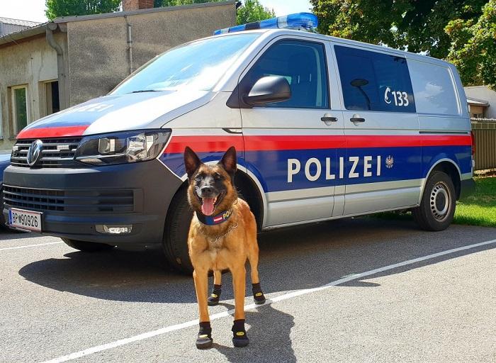 ВВене полицейским собакам выдали обувь для защиты отжары