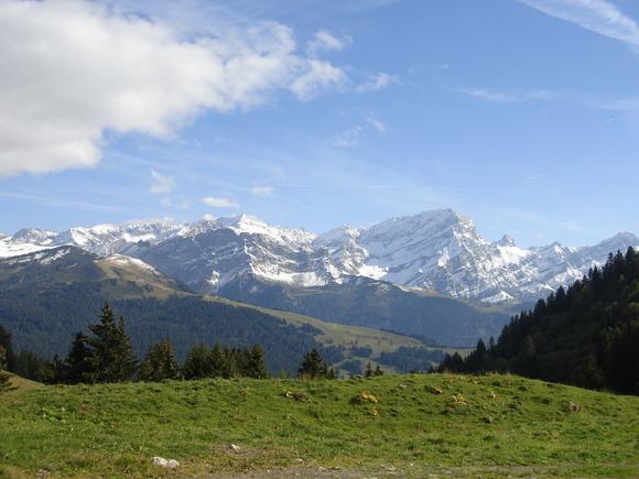 Туристы из РФ засолили грибы вванне пятизвёздочного отеля вШвейцарии