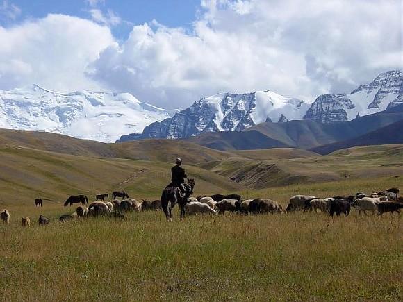 Узбекские таможенники убили напавшего наних пастуха изТаджикистана
