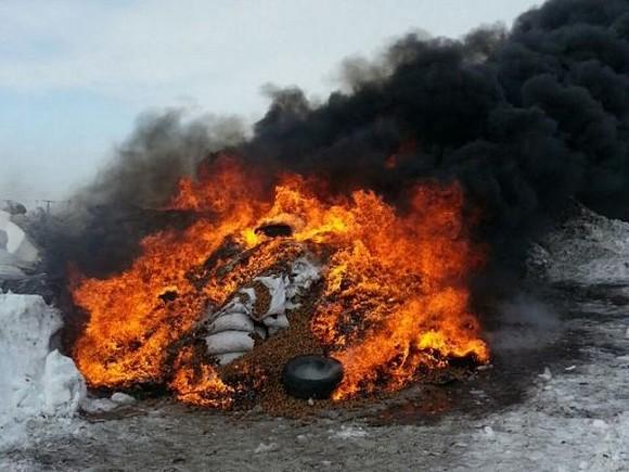Работники Россельхознадзора сожгли наАлтае 20 тонн грецких орехов изсоедененных штатов