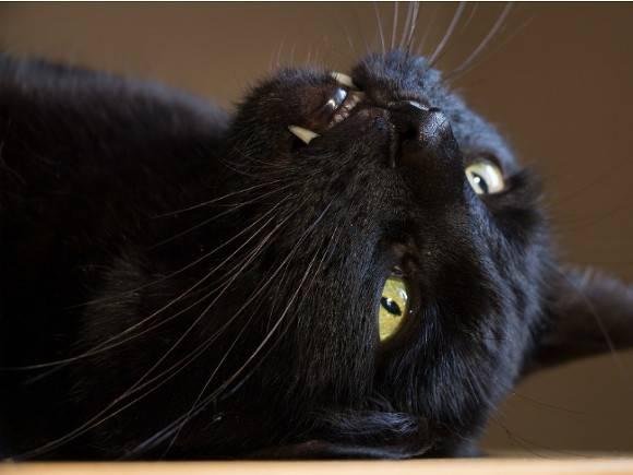 Мужчина реализовал «вещего» кота за5 млн. руб.