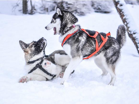 ВПетербурге будут чипировать домашних собак
