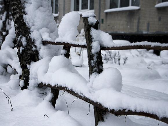 Морозов доконца зимы не предполагается  — Главный синоптик Петербурга