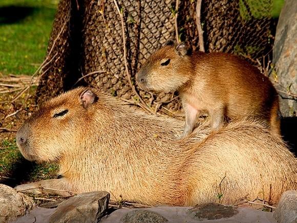 ВМосковском зоопарке в 2017-ом  родились практически  600 детенышей