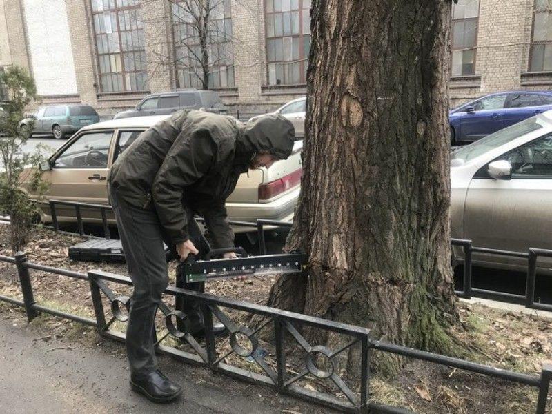 Василеостровцы борются за сохранность деревьев в Петербурге