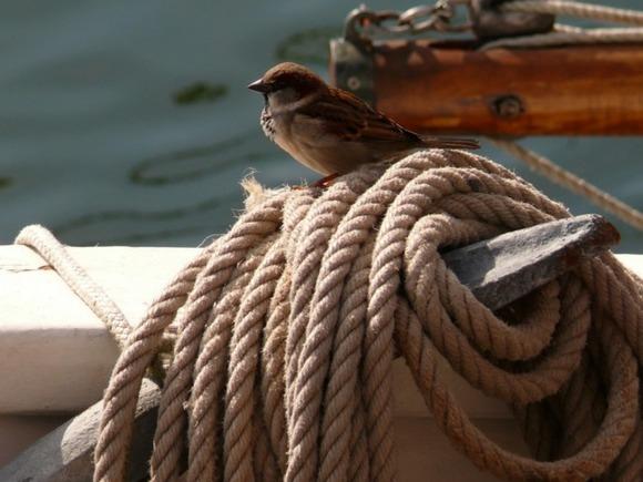 Изпетербургского яхт-клуба угнали катер за млн.
