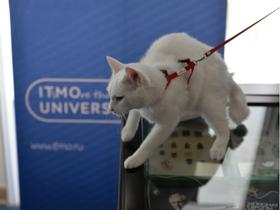 Фото предоставлено «Республикой кошек»