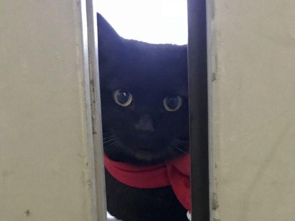 ВЯпонии охранник неменее полутора лет непускает 2-х котов вмузей