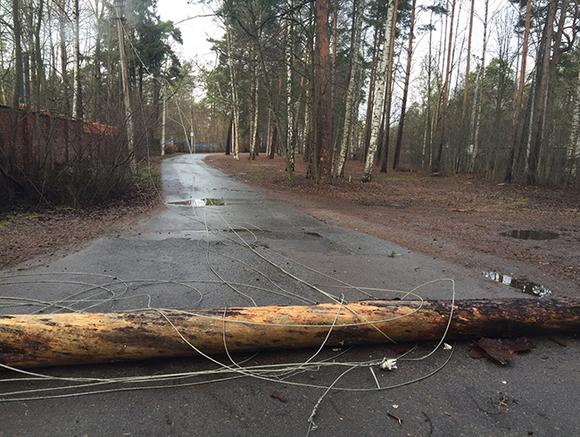 В Томске ветер повалил деревья и оставил жителей без света