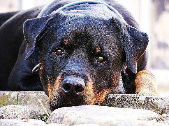 ВВеликобритании собачка открыла докторам скорой помощи дверь, спасая жизнь владельца