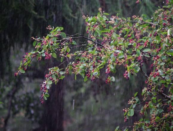 Москвичам пообещали грозу с градом