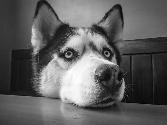 Приморец, выкинувший собаку с пятого этажа, получил полгода исправительных работ