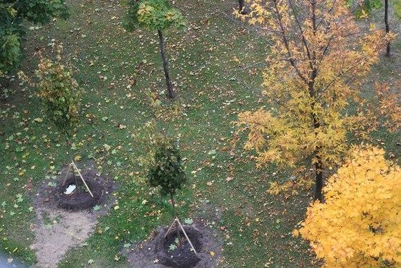 В Петербурге создали аллею памяти медиков, погибших от COVID-19