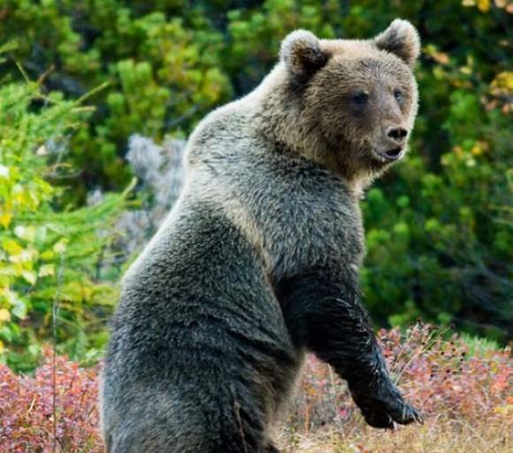 Найдено тело туриста из Москвы, которого задрал медведь в красноярском нацпарке (видео)