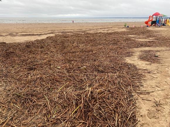 Шторм выкинул на берег Финского залива мусор и труп ондатры