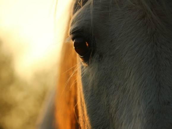 В Марий Эл врачи скорой добирались к пациентке на телеге с лошадью (видео)