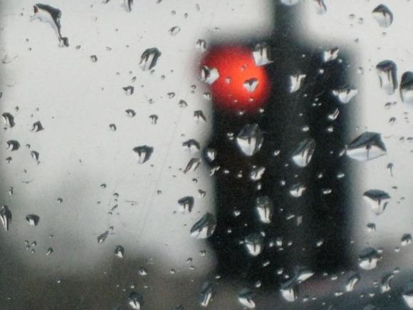 «Листва опала, пришла очередь деревьев, знаков, светофоров»: шторм принес разрушения в Петербург