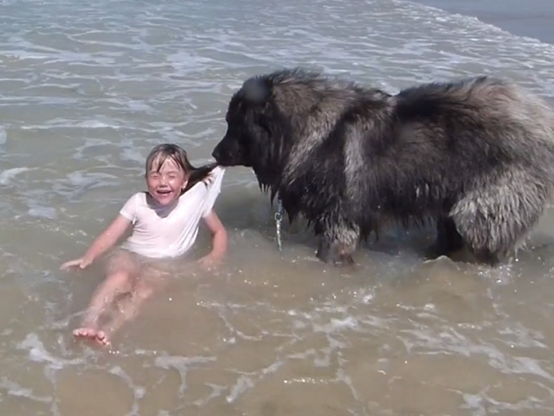 Собака спасает маленькую девочку от океанских волн самым милым ...