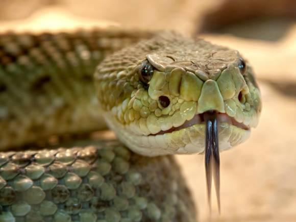 На фоне возросшей активности змей эксперты рассказали, как избежать  неприятных последствий от встречи с рептилией - Росбалт