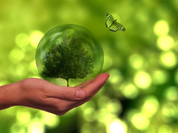 На Васильевском острове пройдет День эколога