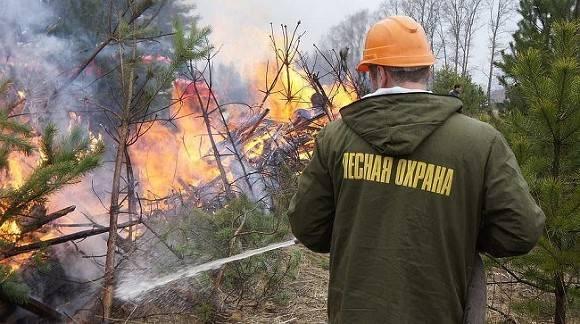 Российские власти объясняют рост лесных пожаров в стране глобальным потеплением и человеческим фактором