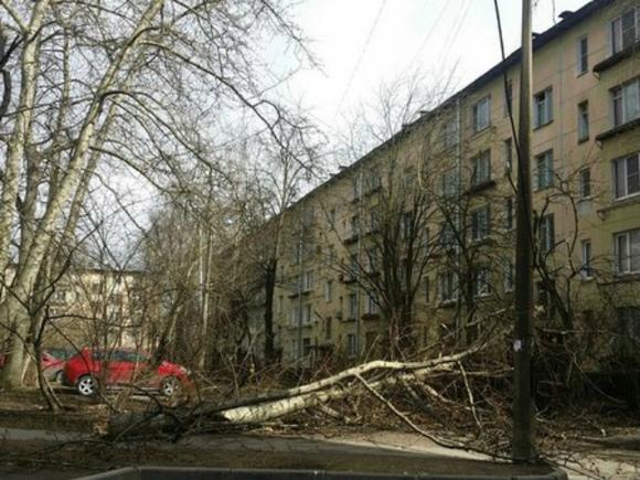 Шквальный ветер в Москве повалил десять деревьев